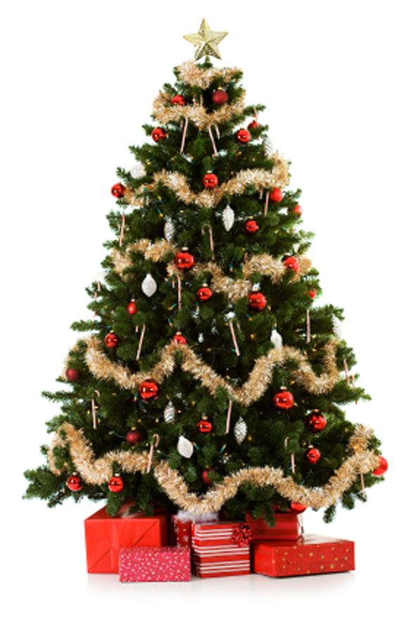 Whole Sale Christmas Trees